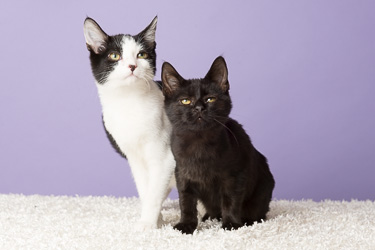 Famous Pairs Kittens